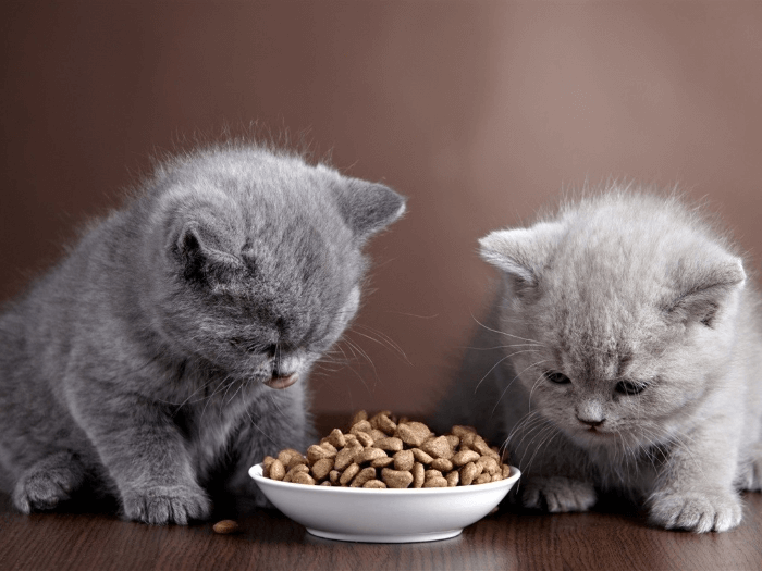 котенка рвет после корма