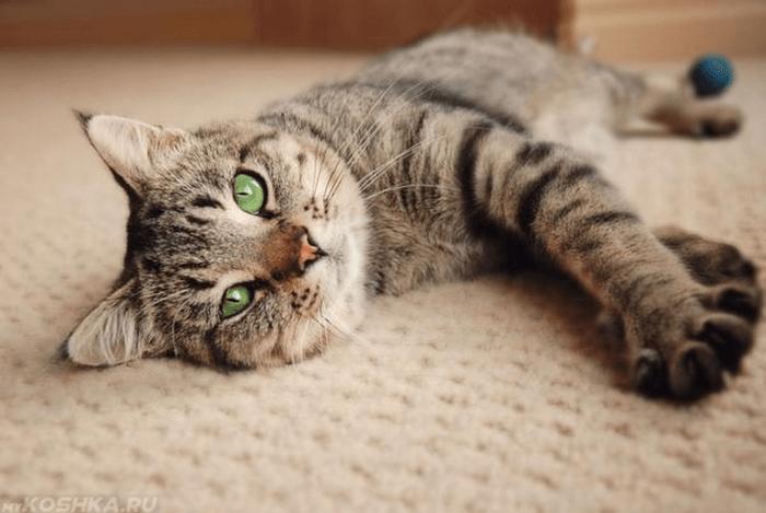 кот плохо себя чувствует