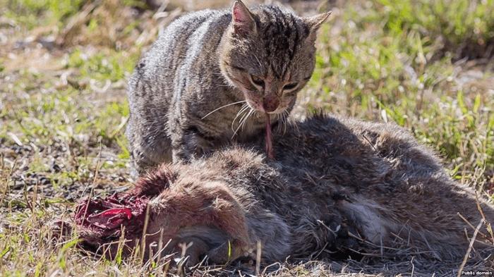 кошка есть добычу
