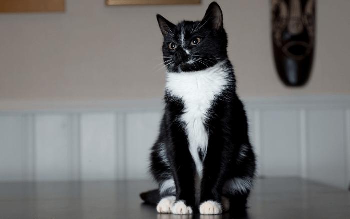 дрессировка кошек для начинающих