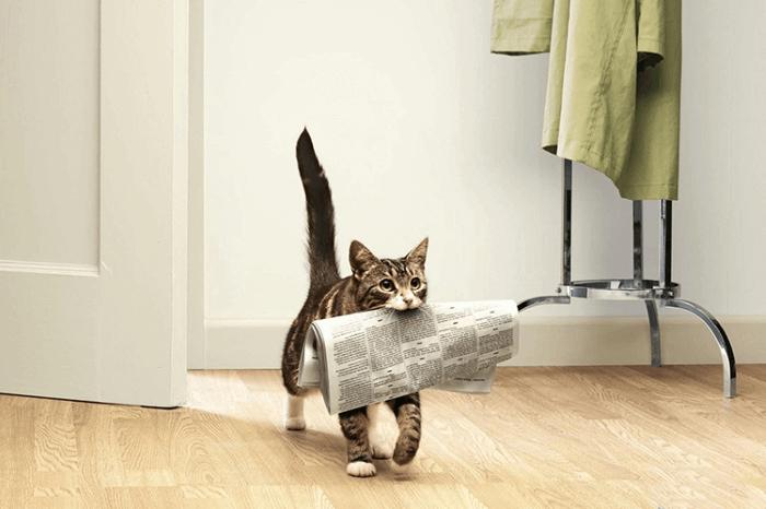 Кот несет газету. Дрессировка и воспитание кошек