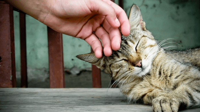 дрессировка кошек в домашних условиях