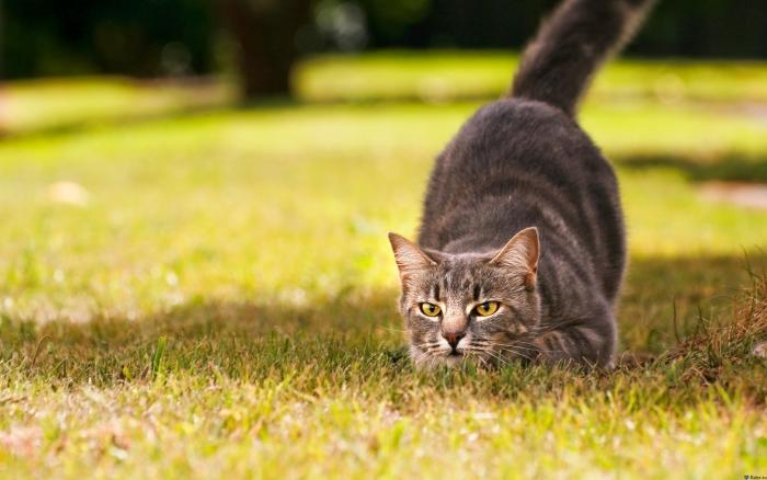 кошка играет в траве