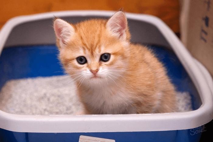 причение котенка к туалету