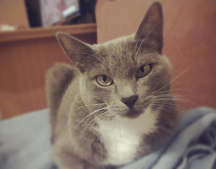 взрослая кошка