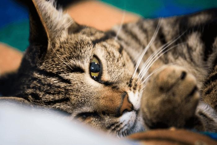 котенок отдыхает