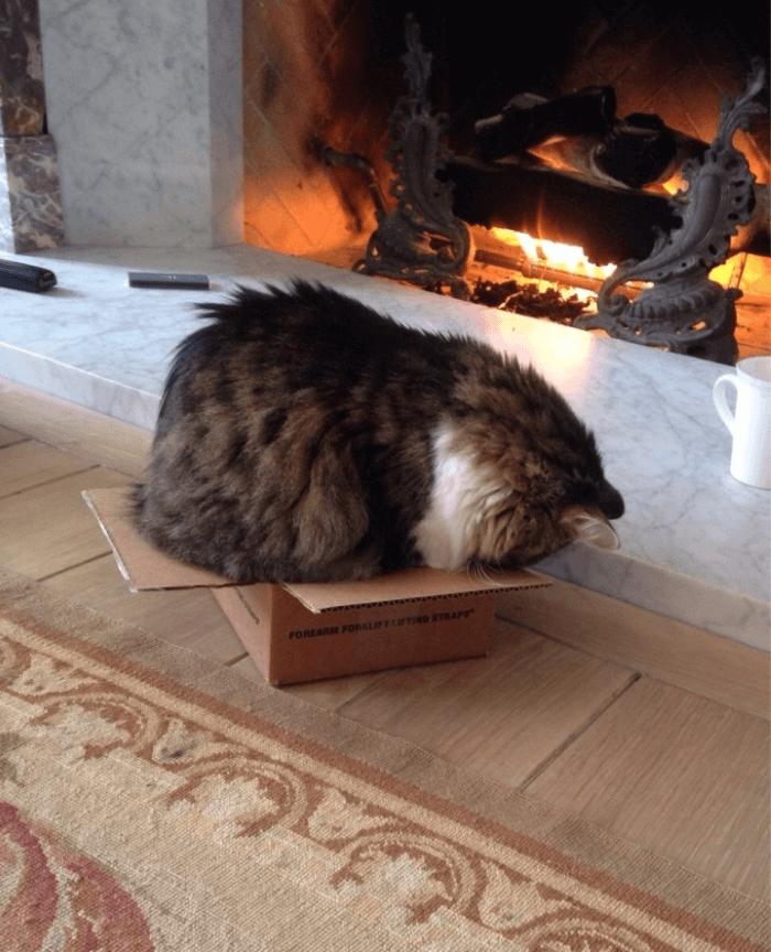 Кот в маленькой коробке