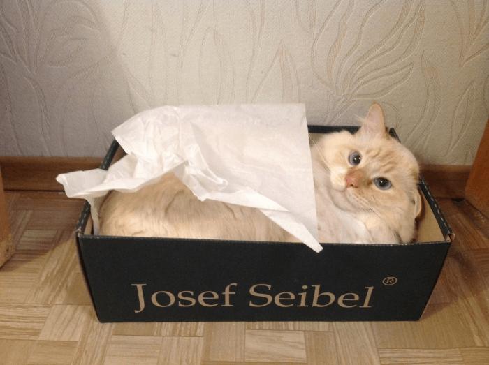 Кошка лежит вкоробке
