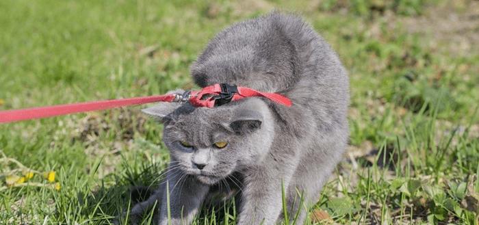 кот не хочет гулять