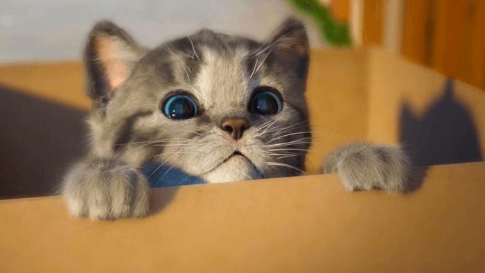 кастрация котенка