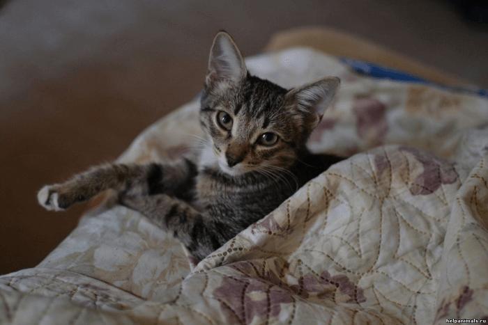 кастрация молодого кота