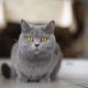 Всемирный день кошек — как поздравляют своих питомцев в разных странах?