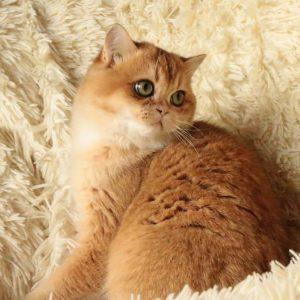 симптомы болезни у кошек
