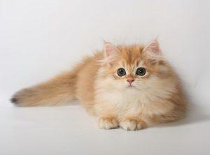 почему у кошки лезет шерсть
