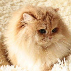 у кошки сильно лезет шерсть