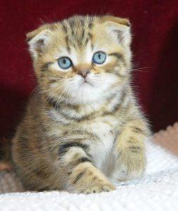 Свечение глаз у кошки в темноте