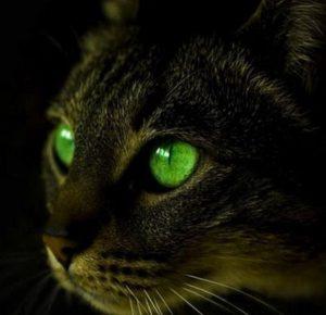 светящиеся глаза кошки