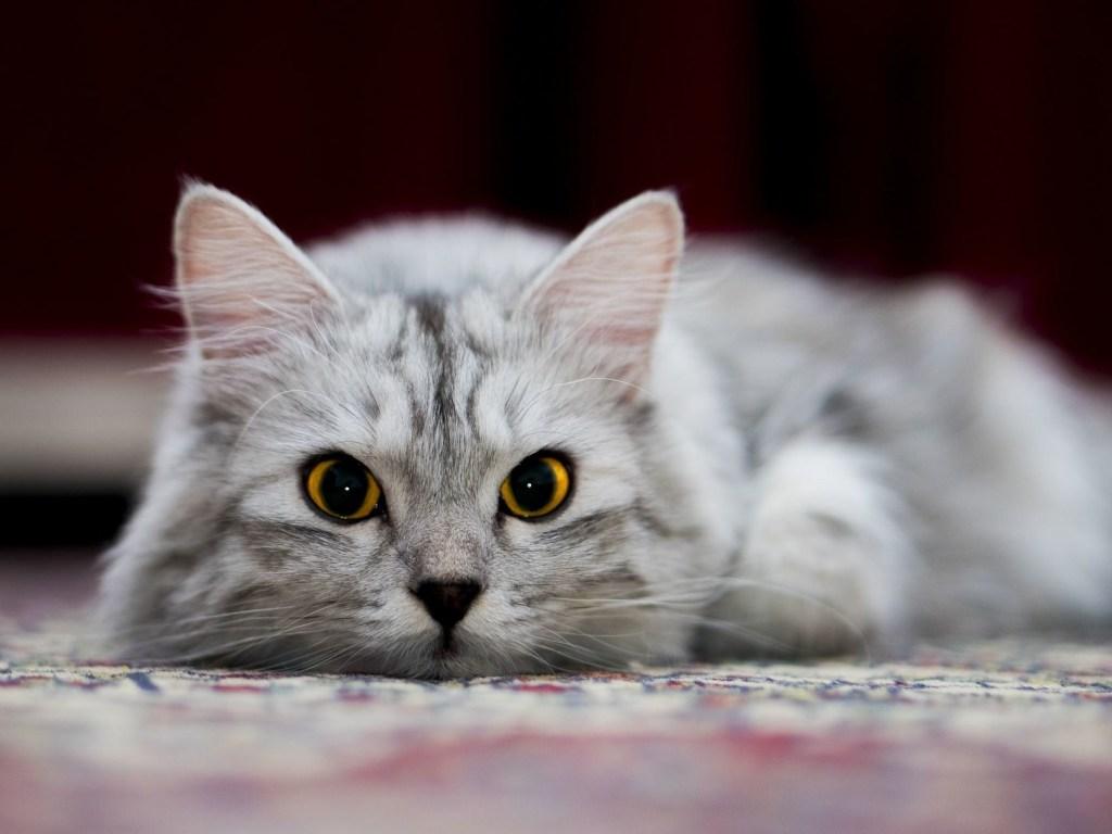 Как дрессировать кошку и сделать её послушной?