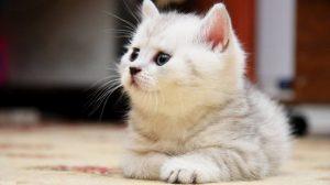 Как самому приучить котенка к лотку