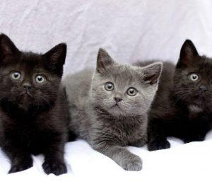 кошки и котята: уход, кормление, игры