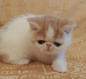 Агрессия у котят